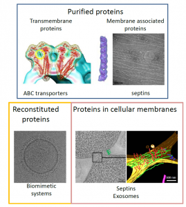 Figure 1: Research areas of interest and strategies. Our team focuses on the functional and structural analysis of membrane proteins and membrane associated proteins. Their functions are analyzed after purification and reconstitution into proteoliposomes. Their structures are determinate by cryo-electron microscopy and cryo-tomography.