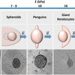 Spontaneous migration of cellular aggregates from giant keratocytes to running spheroids